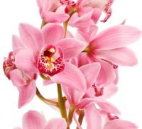 Отдушка косметическая Орхидея  10 мл  - Все для мыла ручной работы - интернет-магазин Blesk-ekb.ru, Екатеринбург